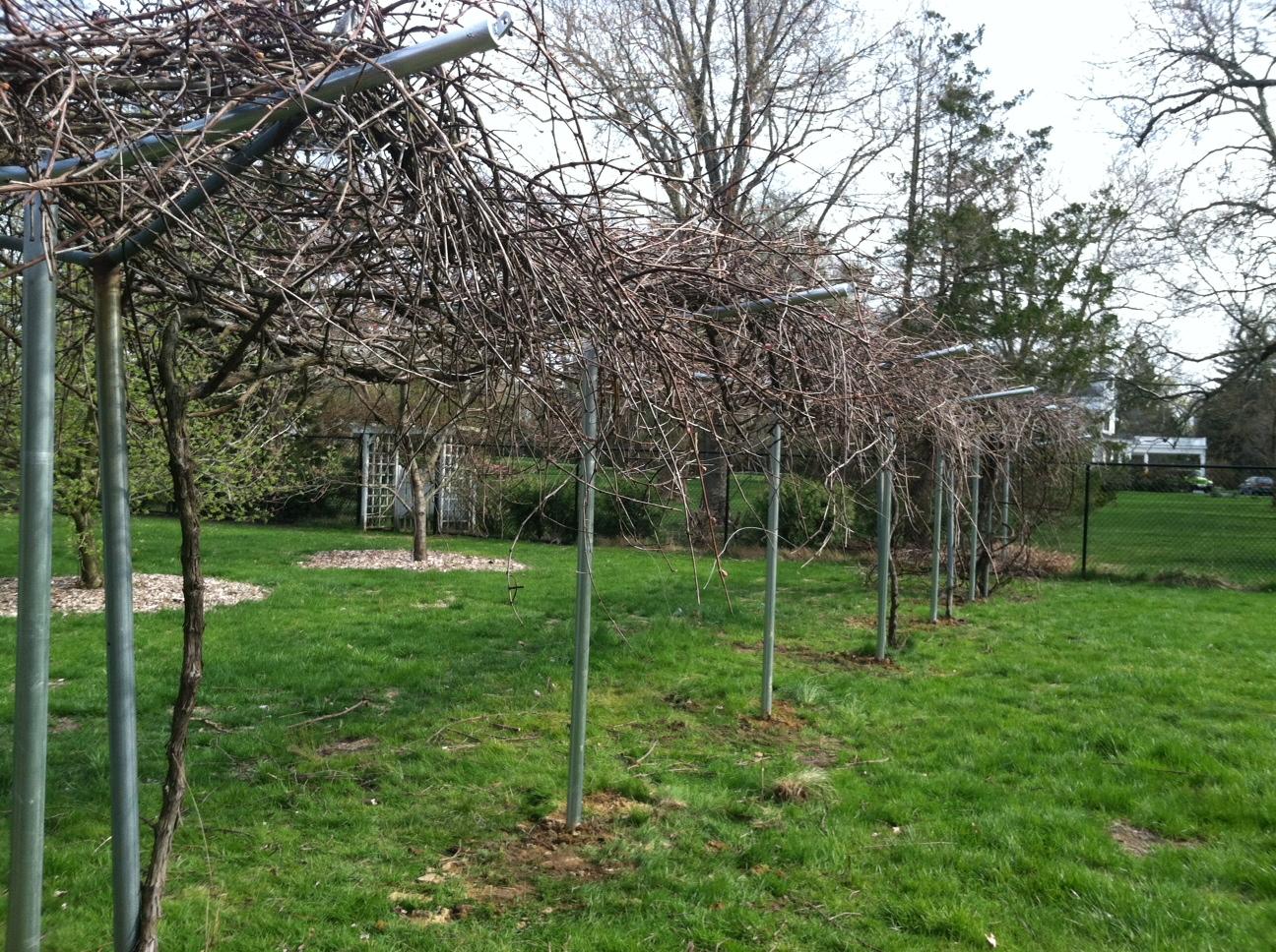 Custom Grape Vine Supports Nj Fence Company Located In