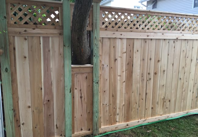 Cedar Lattice Top Fence Installed Around a Tree